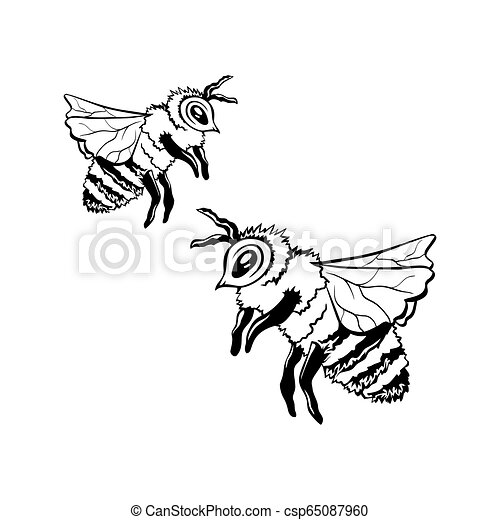 Black vector outline sketch of two honey bees. Two honey ...