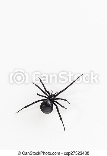 Black Widow Spider Close Up Close Up Dorsal View Of Female Southern