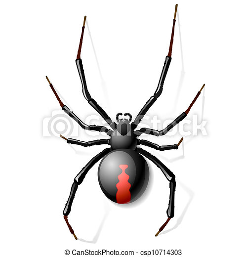 black widow spider vector illustration vector clipart search rh canstockphoto com spyder victor 2 spyder victor 2