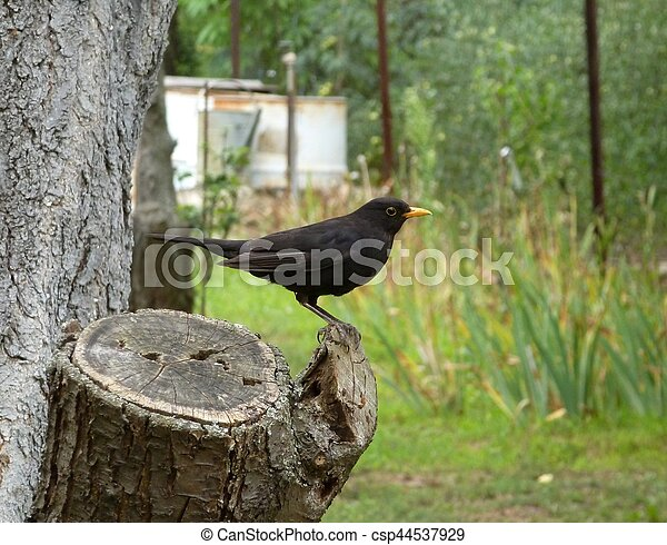 Blackbird standing on a wooden stump - csp44537929
