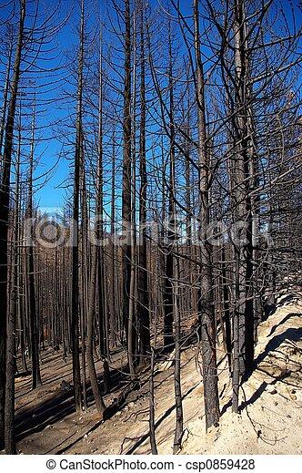 Blackened Forest - csp0859428