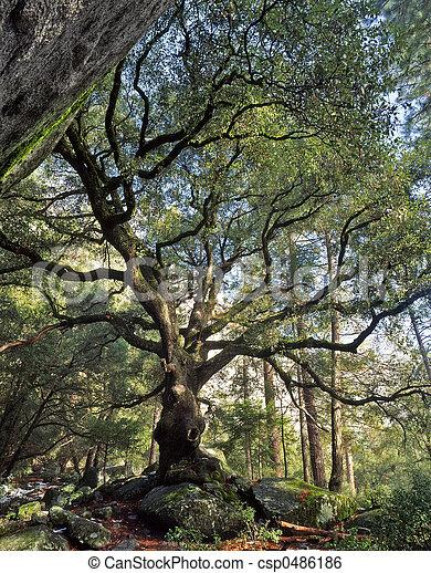 Blackoaktree - csp0486186