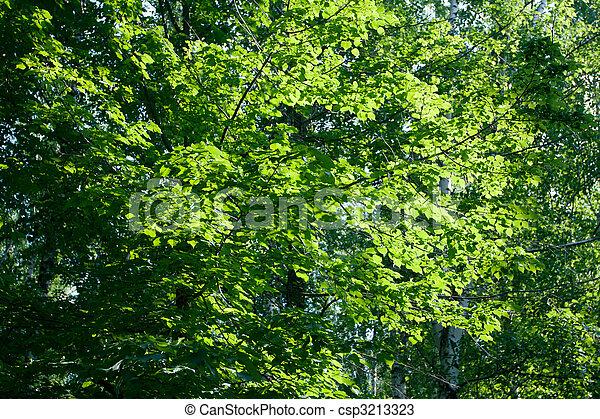 bladeren, achtergrond - csp3213323
