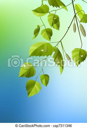 bladeren, dauw, realistisch, groene, tak, berk - csp7311346