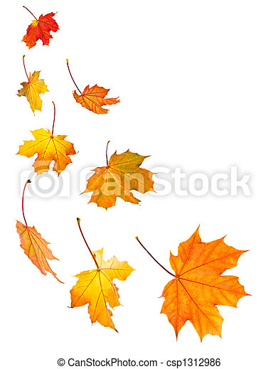 bladeren, esdoorn, achtergrond, herfst - csp1312986