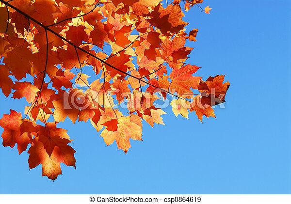 bladeren, esdoorn, herfst - csp0864619