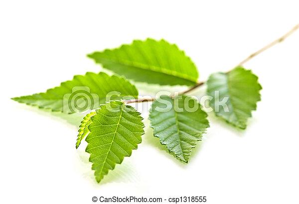 bladeren, groene, tak - csp1318555
