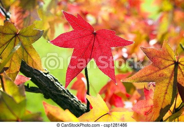 bladeren, herfst - csp1281486