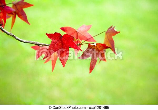 bladeren, herfst - csp1281495