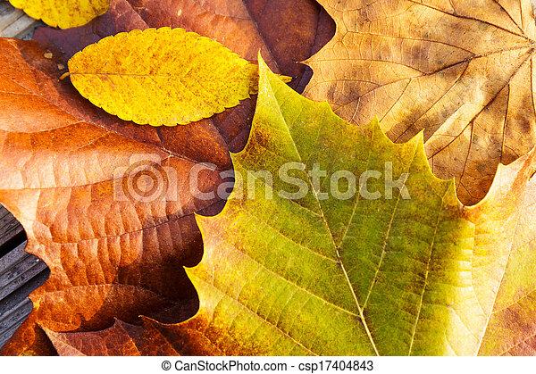 bladeren, herfst - csp17404843