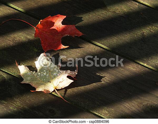 bladeren, hout, herfst - csp0884096