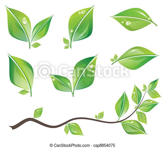 bladeren, set, groene - csp8854075