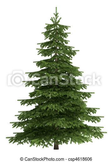 blanc, arbre, isolé - csp4618606