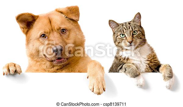 blanc, bannière, chien, au-dessus, chat - csp8139711