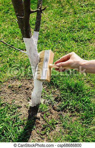blanchir, blanc, arbre, chaux - csp68686800