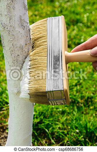 blanchir, blanc, arbre, chaux - csp68686756
