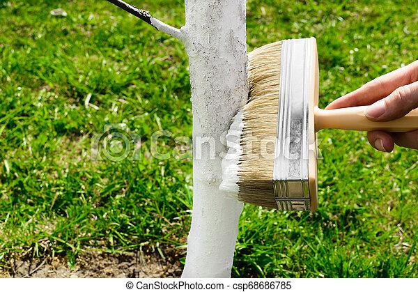 blanchir, blanc, arbre, chaux - csp68686785