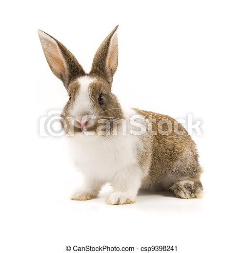 Adorable conejo aislado en blanco - csp9398241