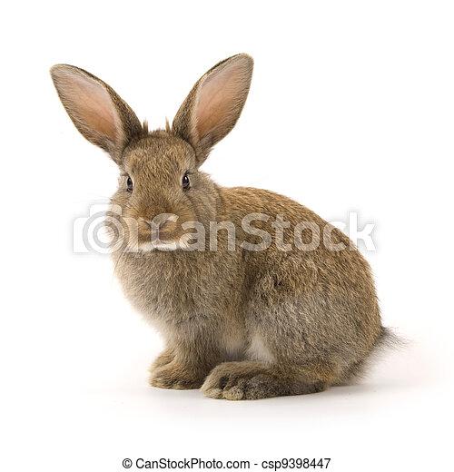 Adorable conejo aislado en blanco - csp9398447