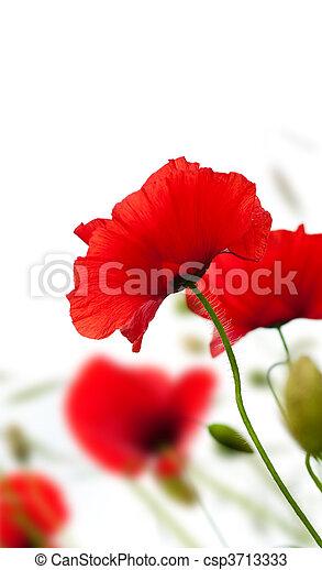 Poppies aislados en blanco - csp3713333