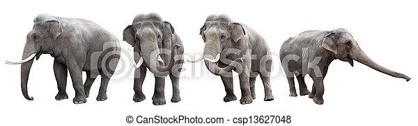 La colección de elefantes está aislada en blanco - csp13627048