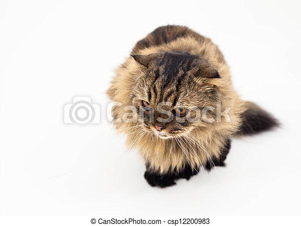 Un gato aislado en un fondo blanco - csp12200983