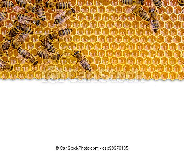 Honeycomb aislada en fondo blanco - csp38376135