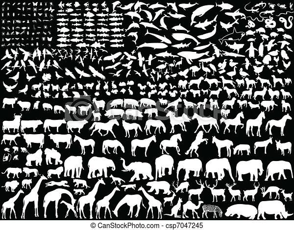 Animales blancos - csp7047245