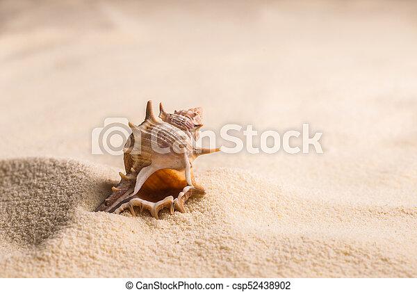 Concha aislada en blanco - csp52438902