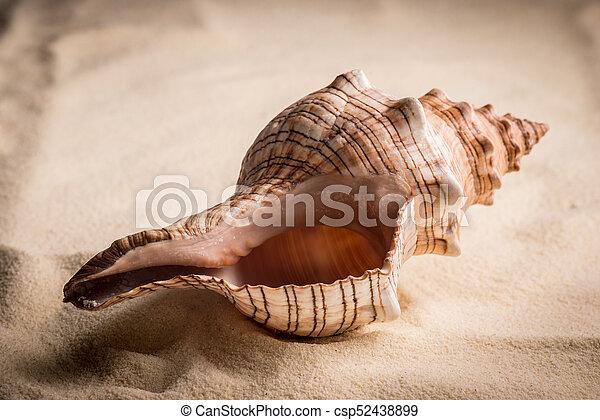 Concha aislada en blanco - csp52438899