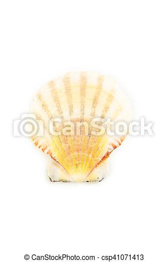 Concha aislada en blanco - csp41071413