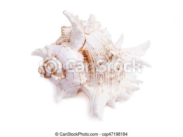 Concha aislada en blanco - csp47198184