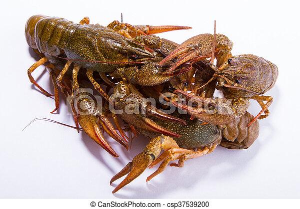 Crayfish aislado en blanco - csp37539200