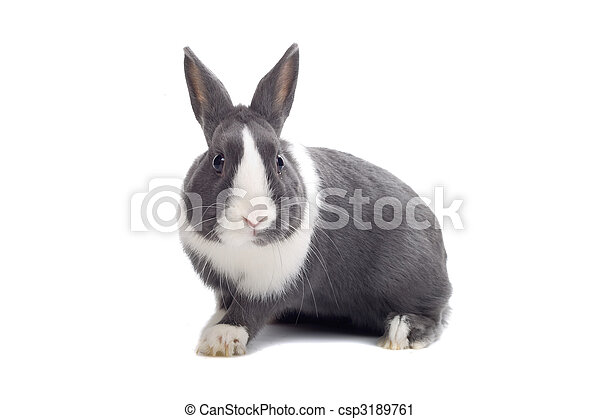 Conejo blanco y gris - csp3189761