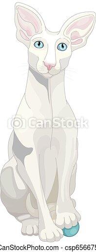 Gato blanco - csp65667550