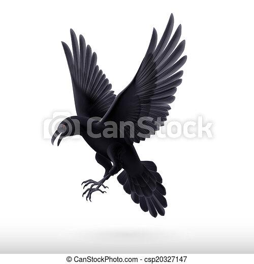 Cuervo negro sobre fondo blanco - csp20327147