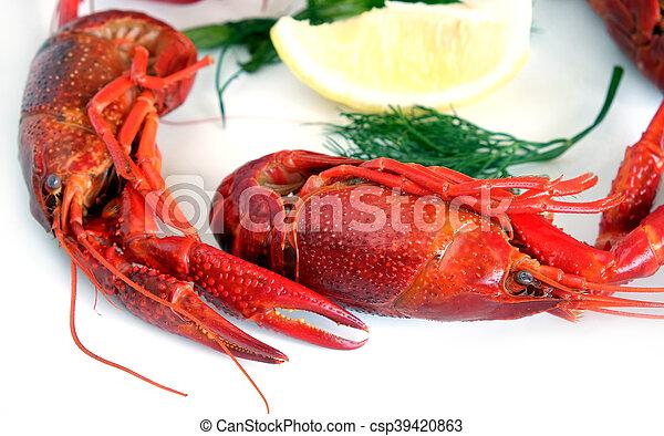 Un cangrejo hervido aislado en blanco - csp39420863
