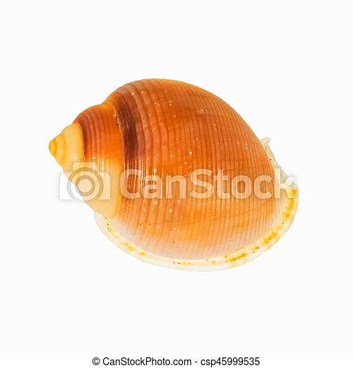 El marisco en el fondo blanco aislado, - csp45999535