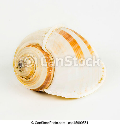 El marisco en el fondo blanco aislado, - csp45999551