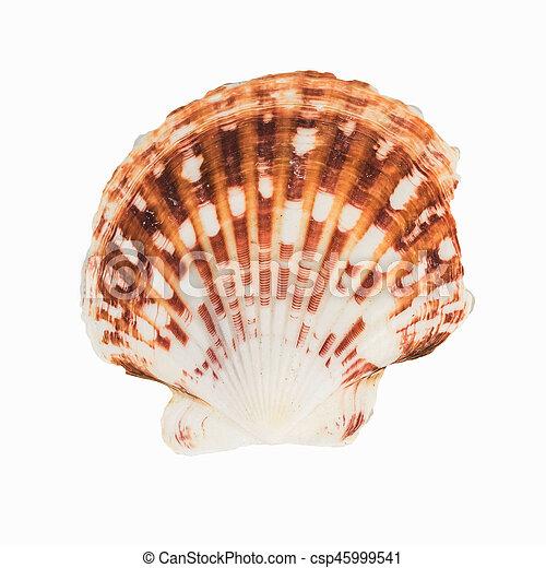 El marisco en el fondo blanco aislado, - csp45999541