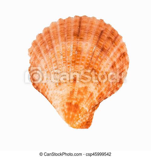 El marisco en el fondo blanco aislado, - csp45999542
