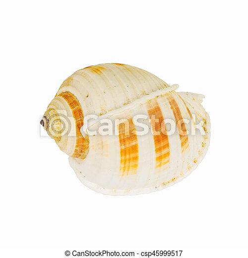 El marisco en el fondo blanco aislado, - csp45999517