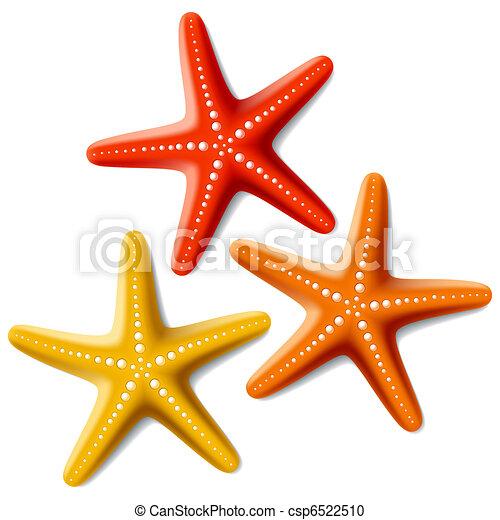 Tres estrellas de mar en blanco - csp6522510