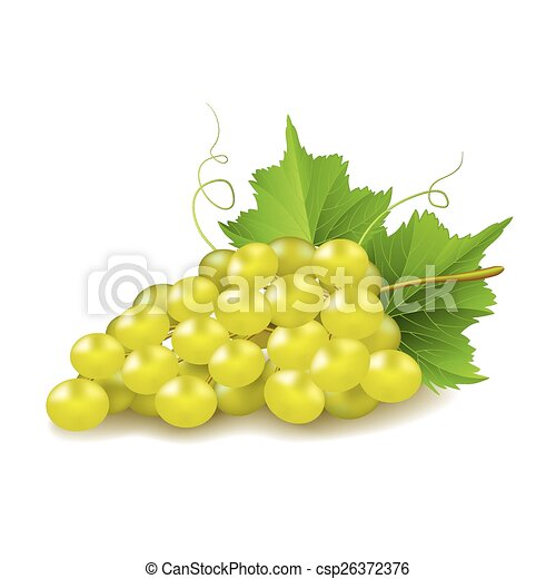 Uvas aisladas en vector blanco - csp26372376