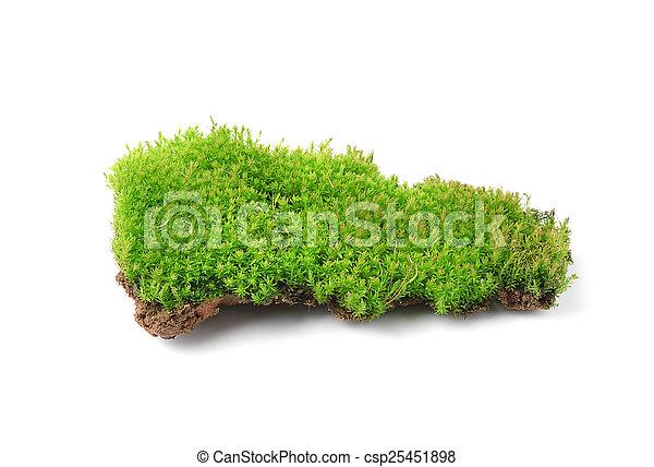 Musgo verde aislado en bakground blanco - csp25451898