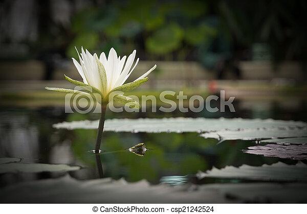 Aguafiestas meditativas blancas - csp21242524
