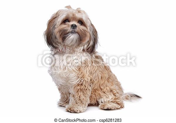 boomer hund