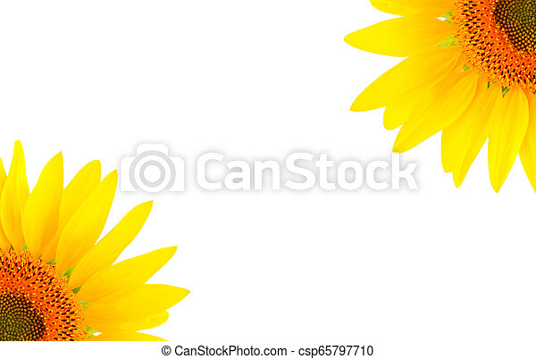 Blank white page decorated with sunflowers - csp65797710