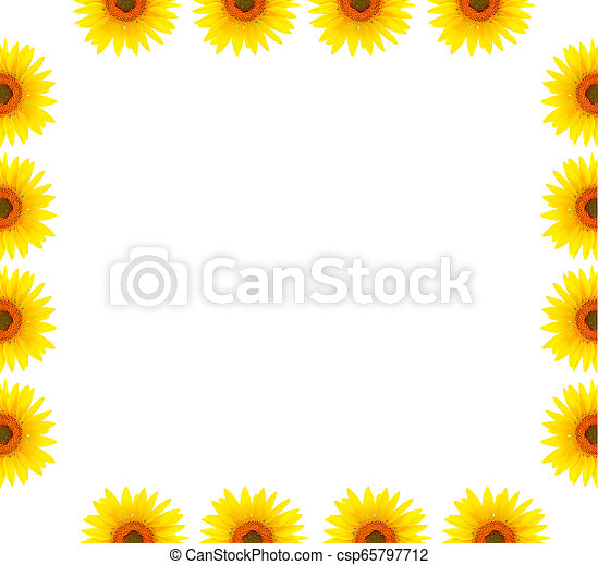 Blank white page decorated with sunflowers - csp65797712