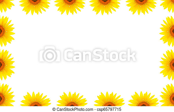 Blank white page decorated with sunflowers - csp65797715